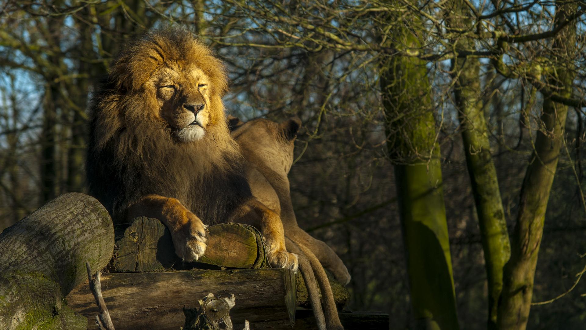 Im Duisburger Zoo